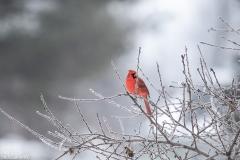 Backyard-Birds-Winter-2
