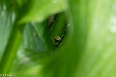 Treefrog-3