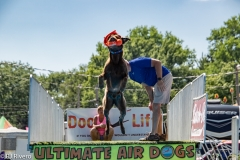 Air-Dogs-2019-12