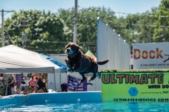 Air-Dogs-2019-5